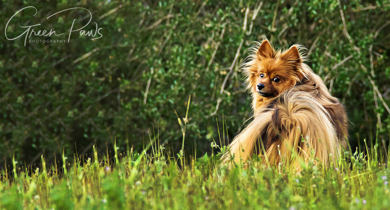 ©2018 Green Paws Photography. All Rights Reserved. Any use of images without photographer's permission is a violation of copyright law. Please do not copy, share, or otherwise use images without permission.