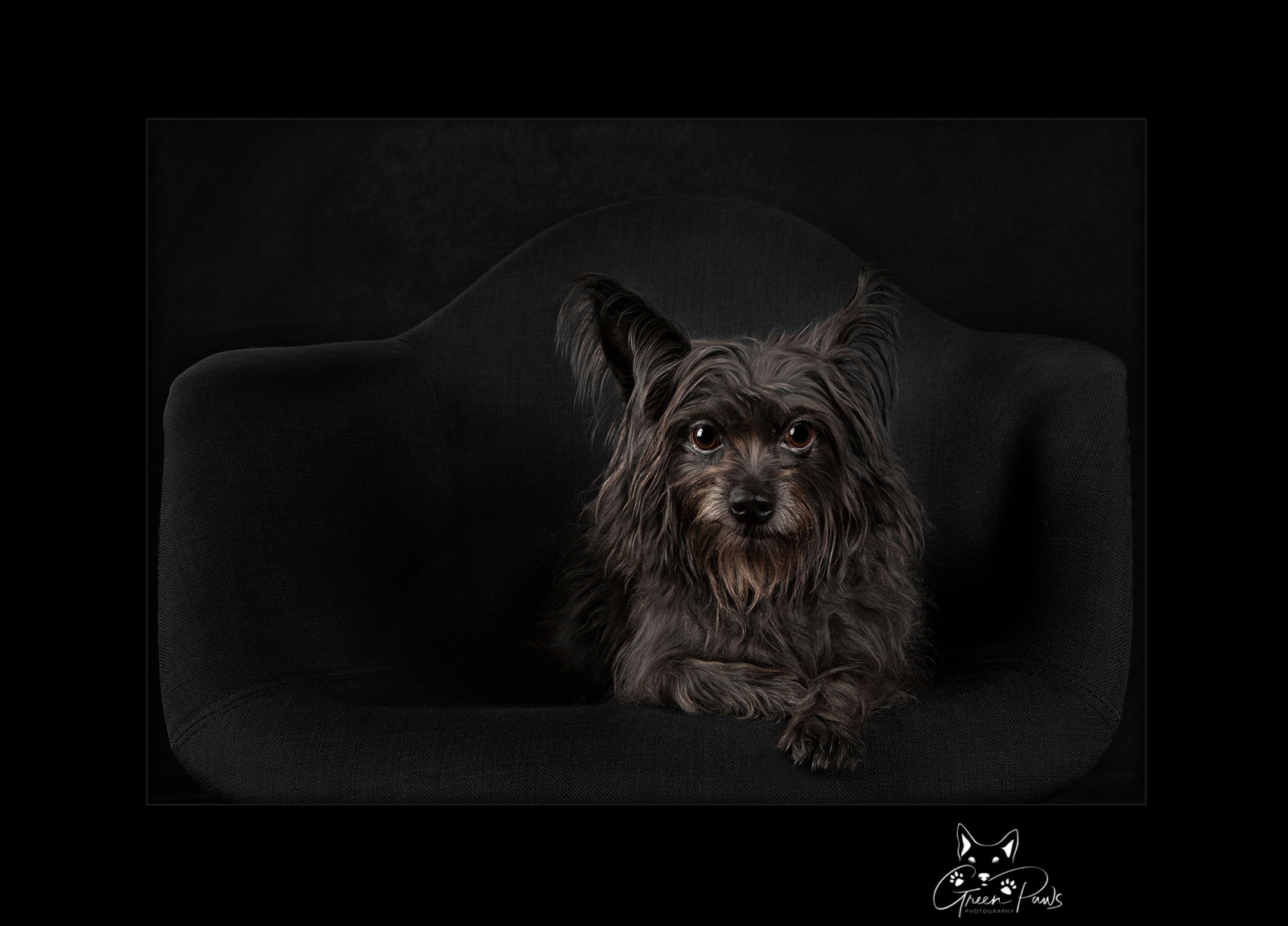 ©2021 Green Paws Photography. All Rights Reserved.